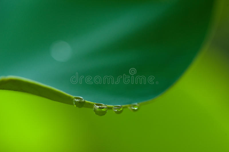 vatten för lotusblomma för droppkantleaf arkivfoto