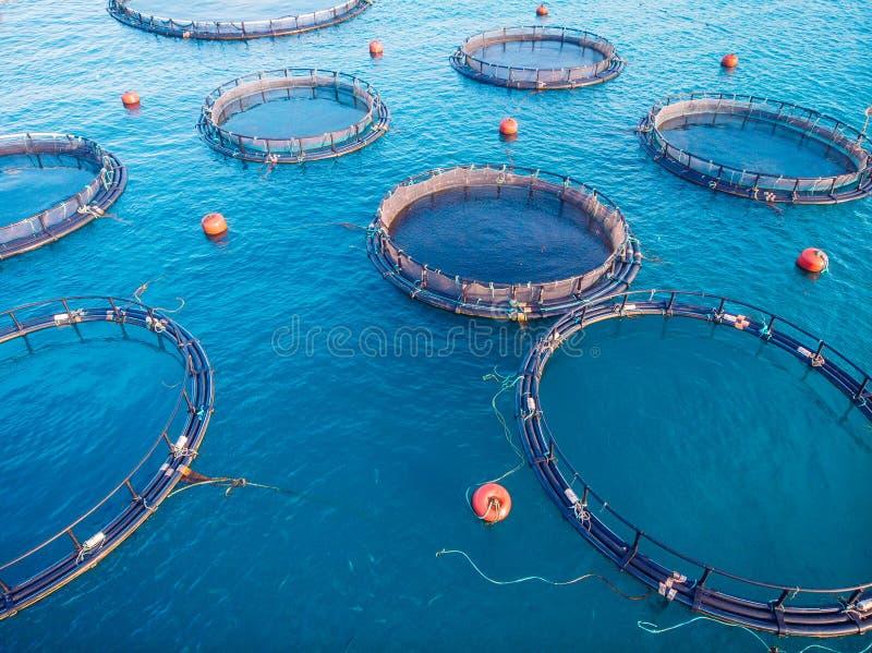 Vatten för vattenbruk för lantgårdfisklax som blått svävar burar Flyg- b?sta sikt royaltyfri fotografi