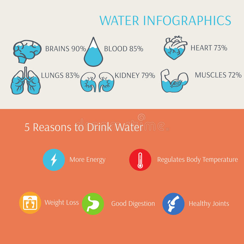 Vatten i den människokroppInfographics vektorn royaltyfri illustrationer