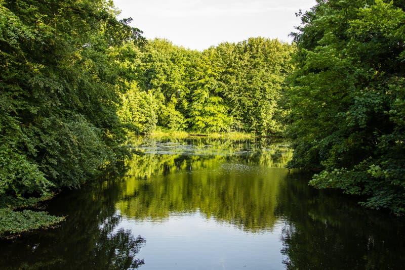 Vatten i skog arkivbilder