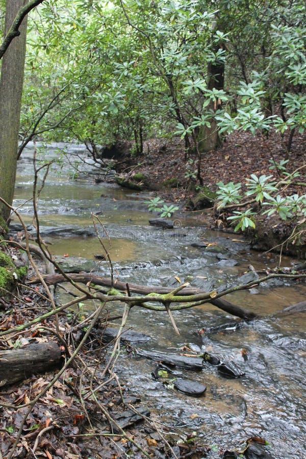 Vatten i skogen royaltyfria bilder