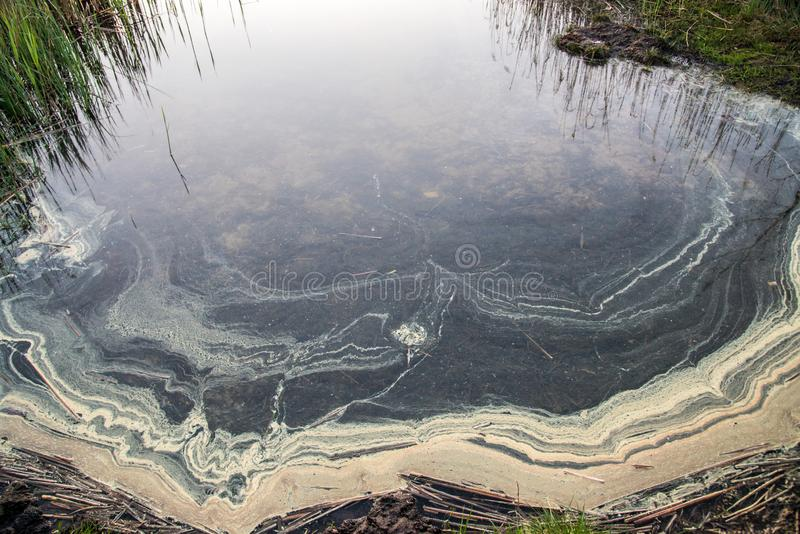 Vatten med pollen i sjön arkivbilder