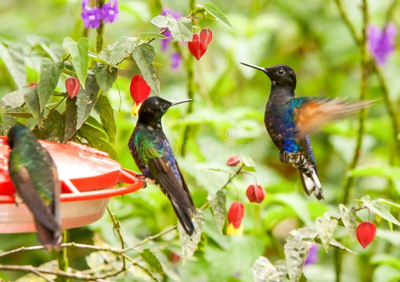 Vatten med Sugar Dispenser For Hummingbirds royaltyfria foton