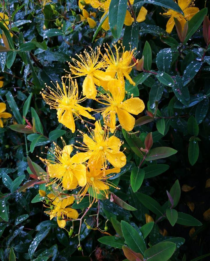Vatten på blommorna royaltyfri fotografi