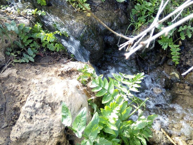 Vatten & x27; s-vår arkivfoto