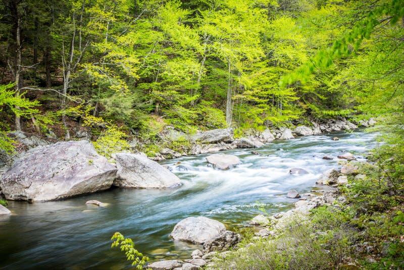 Vatten som flödar ner en ström nära Hamilton Falls, Vermont, USA arkivbild
