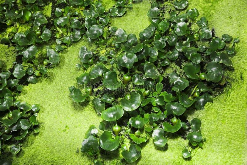 vatten- växt royaltyfria foton