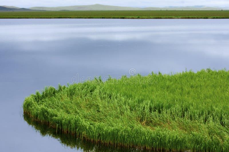 Vatten- växter royaltyfria foton