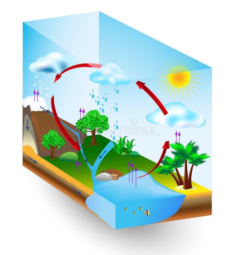Vattencirkulering. natur. Vektordiagram royaltyfri illustrationer