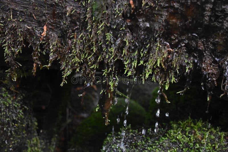 Vattendroppander fotografering för bildbyråer