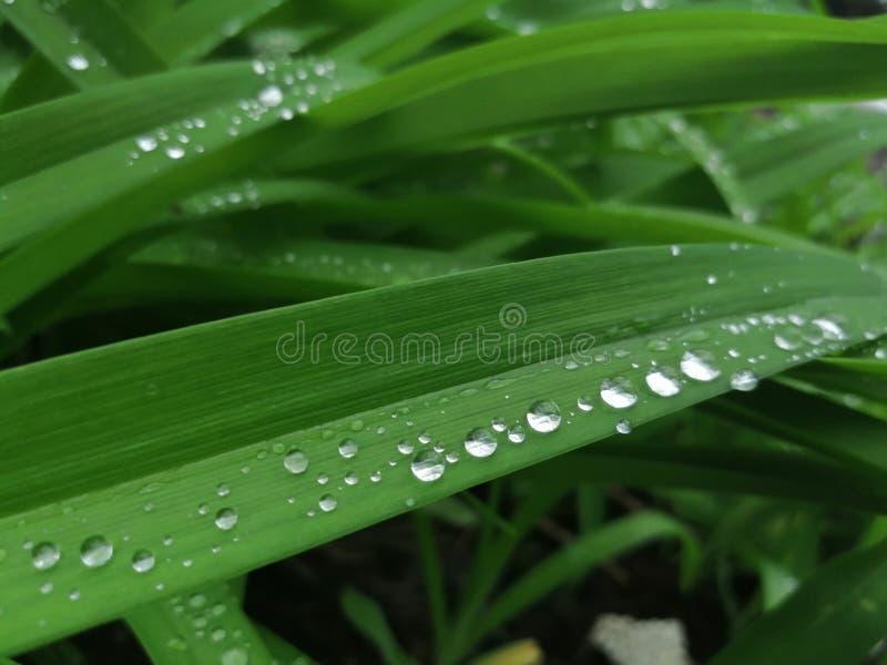 Vattendroppar i grönt gräs arkivbild
