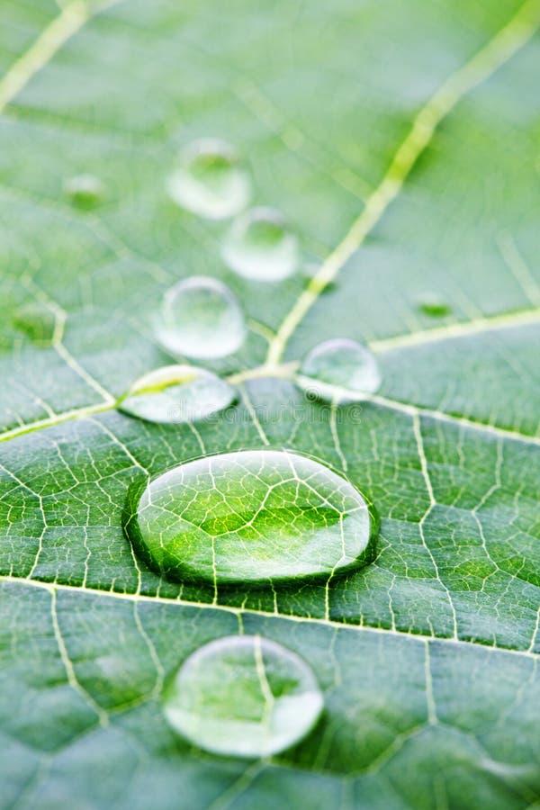 Vattendroppar på bladmakro royaltyfri fotografi