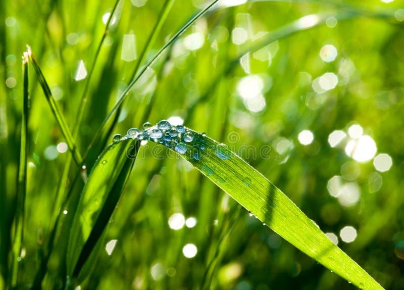 Vattendroppar på gräset arkivfoto