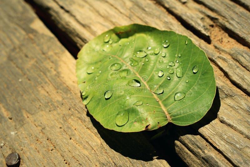 Vattendroppar på leaves arkivbilder