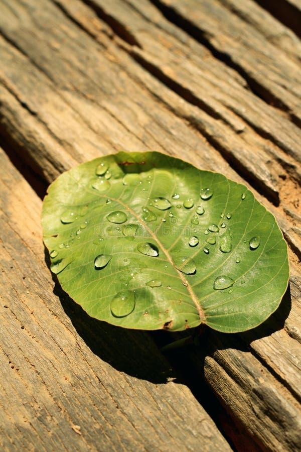 Vattendroppar på leaves arkivfoton