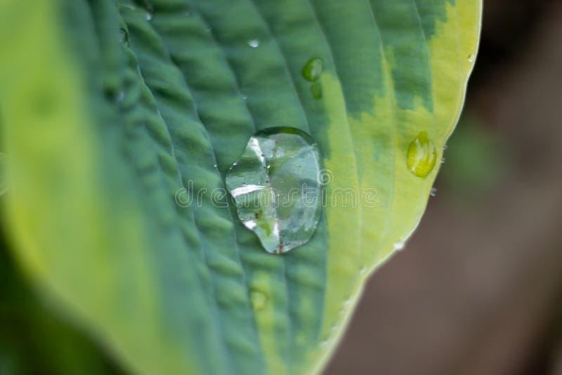 Vattendroppar p? ett v?xtblad royaltyfri bild