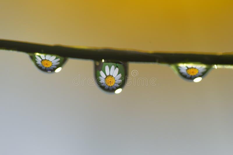 Vattendroppblomma royaltyfri fotografi