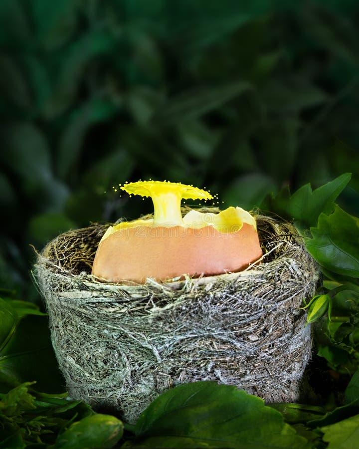 Vattendroppe Art Into ett ägg Shell In ett rede royaltyfri fotografi