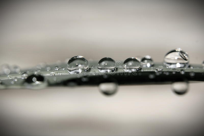 Vattendroppe på bladet arkivfoton