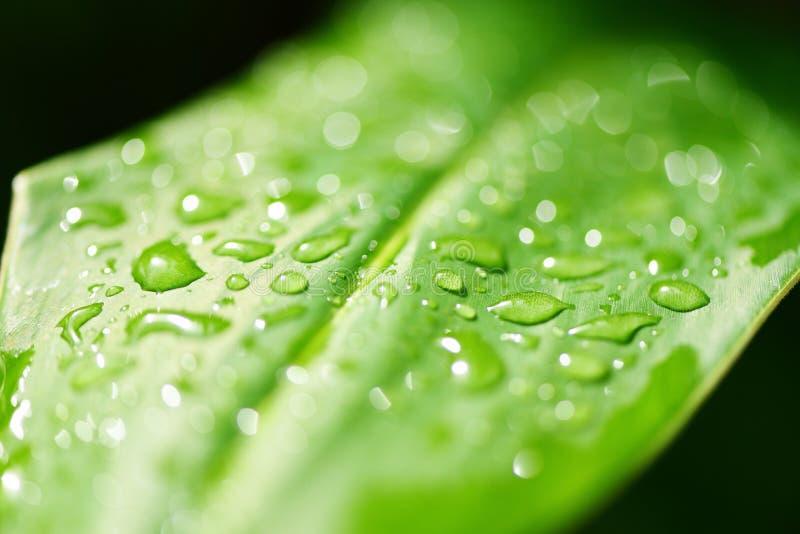 Vattendroppe på sidor i skogen - droppe av dagg i morgon på bladet med solljus efter regn arkivfoton