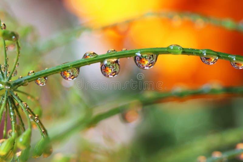 Vattendroppreflexionen blommar naturen royaltyfri fotografi