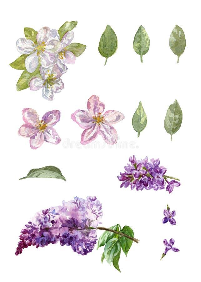 Vattenfärgäpple- och lilablommor vektor illustrationer