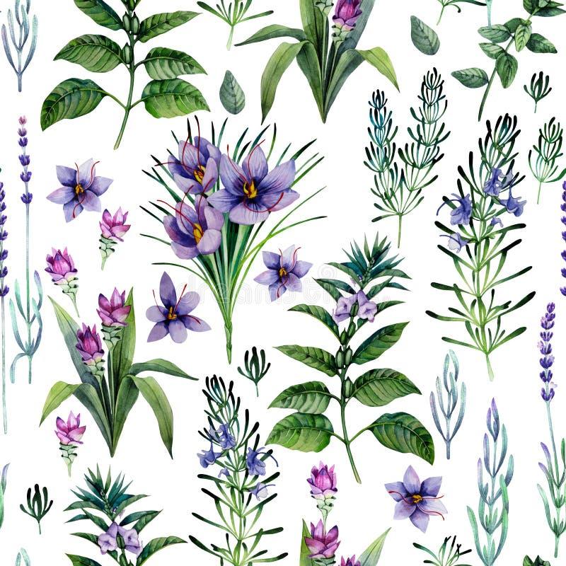 Vattenfärgörter och kryddor stock illustrationer