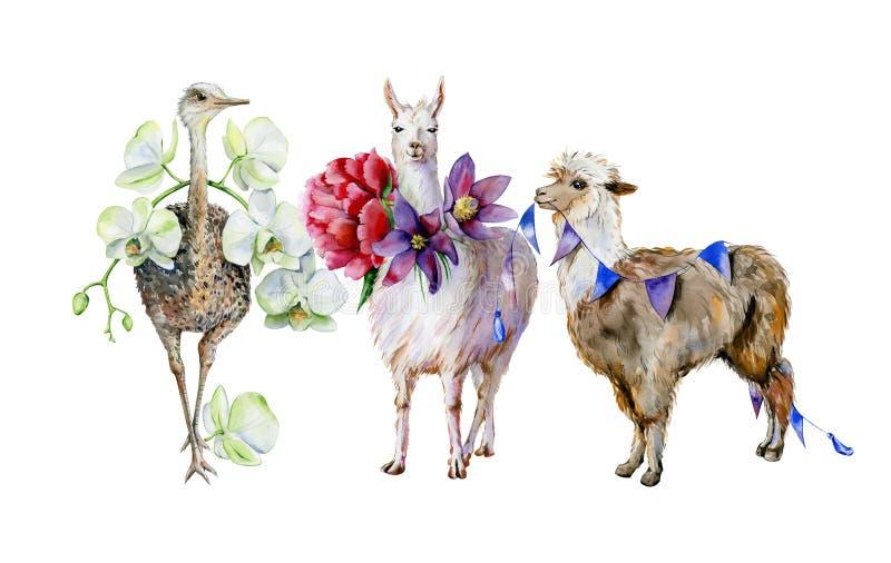 Vattenfärg av alpaca, den gulliga laman och strutsen vektor illustrationer