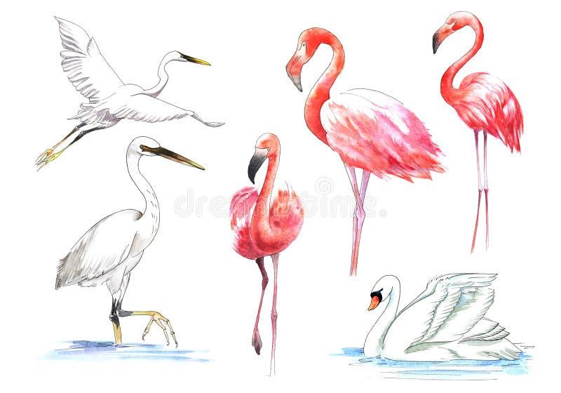 Vattenfärg målad fågel Den större flamingo i färg royaltyfri illustrationer