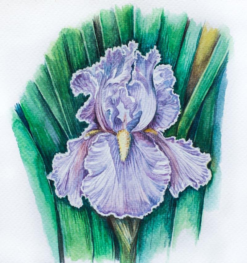 Vattenfärg som målar Iris Flower arkivfoton