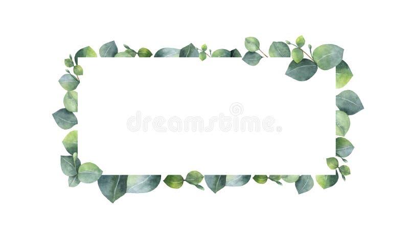 Vattenfärgbanret med den gröna eukalyptuns lämnar och förgrena sig royaltyfri foto
