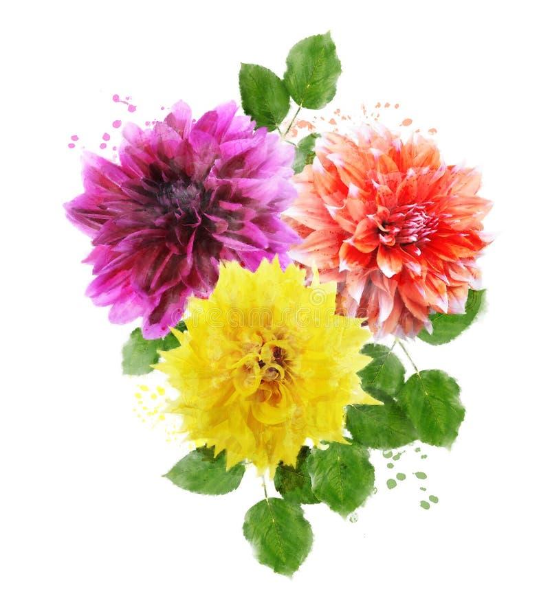Vattenfärgbild av Dahlia Flowers vektor illustrationer