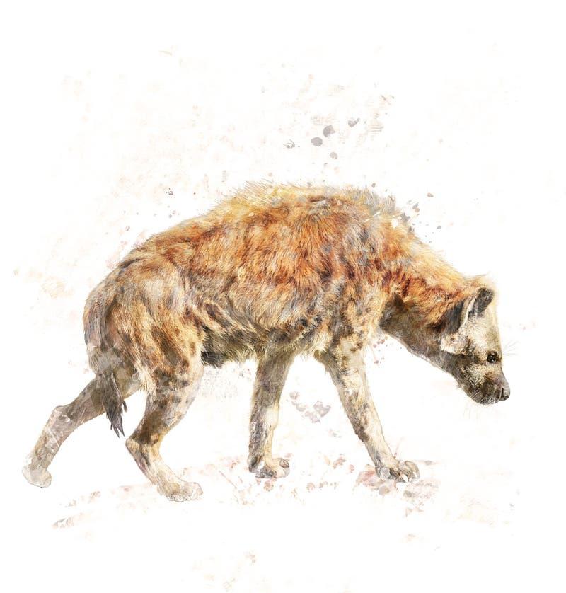 Vattenfärgbild av den prickiga hyenan stock illustrationer