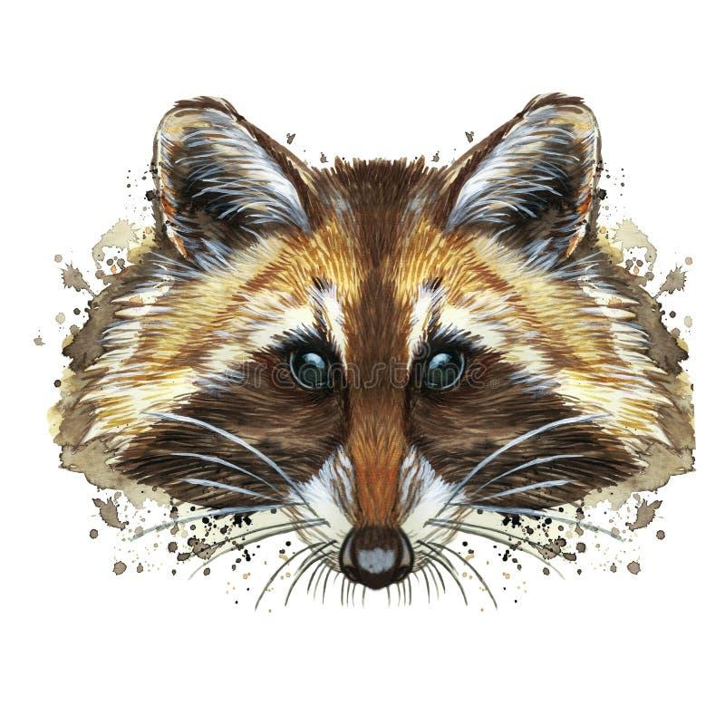 Vattenfärgbild av ett djur av släktet av rov- däggdjur av tvättbjörnfamiljen, tvättbjörntvättbjörn, tvättbjörn, tvättbjörnportrai royaltyfri illustrationer