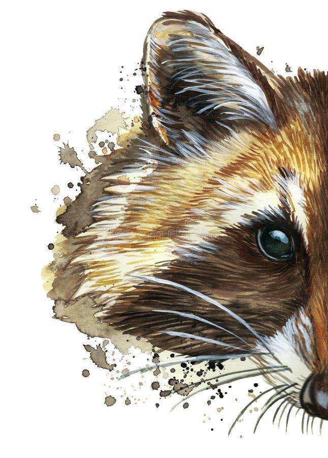 Vattenfärgbild av ett djur av släktet av rov- däggdjur av tvättbjörnfamiljen, tvättbjörntvättbjörn, tvättbjörn, tvättbjörnportrai stock illustrationer