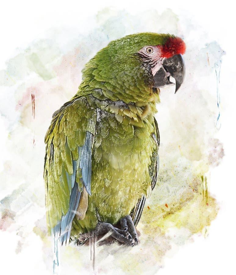Vattenfärgbild av papegojan stock illustrationer