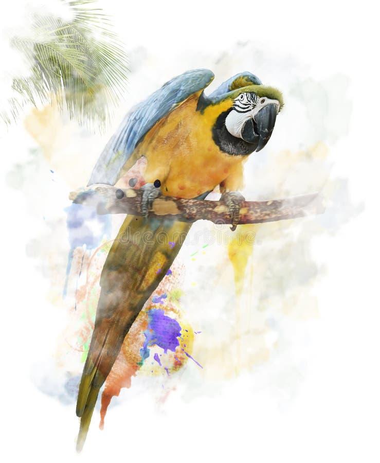 Vattenfärgbild av papegojan vektor illustrationer