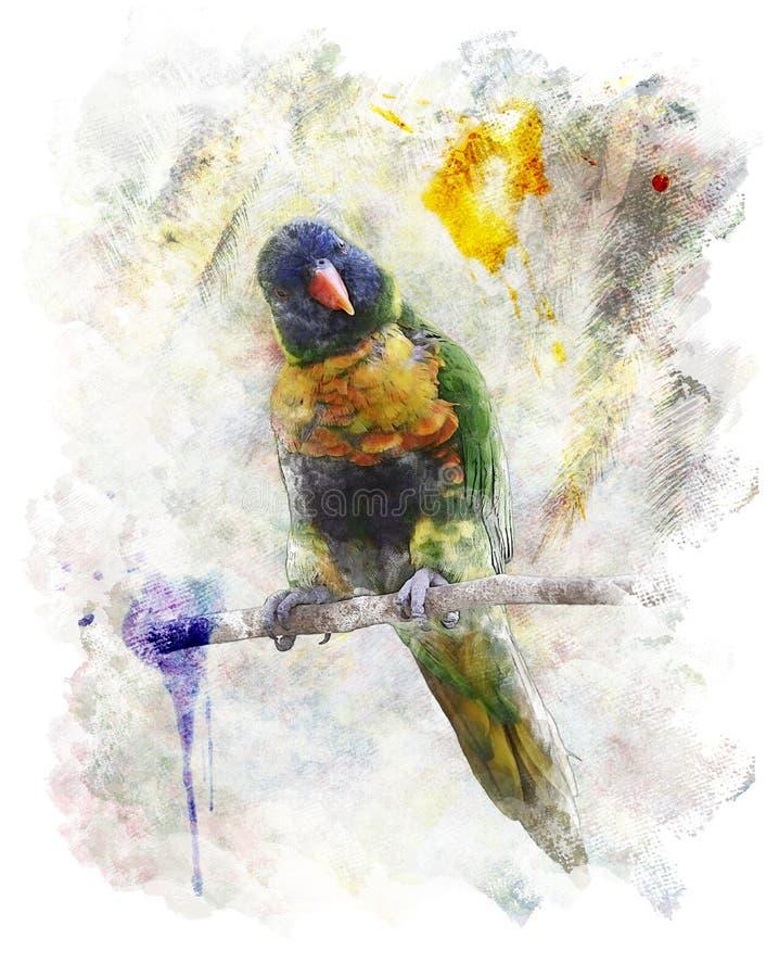 Vattenfärgbild av papegojan (regnbågen Lorikeet) vektor illustrationer