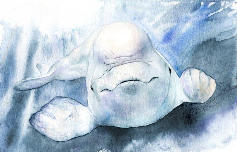Vattenfärgbild belushi Delphinapterusleucas stock illustrationer