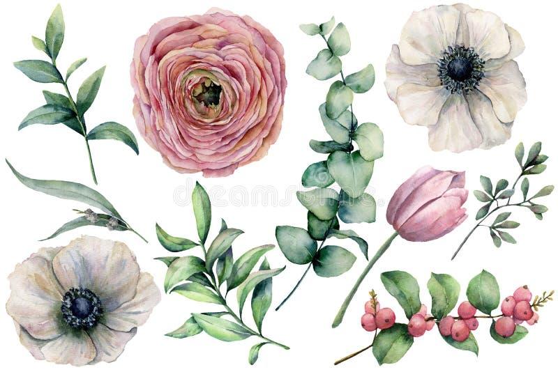 Vattenfärgblommauppsättning med eukalyptussidor Räcka den målade anemonen, ranunculusen, tulpan, bär och filialen som isoleras på