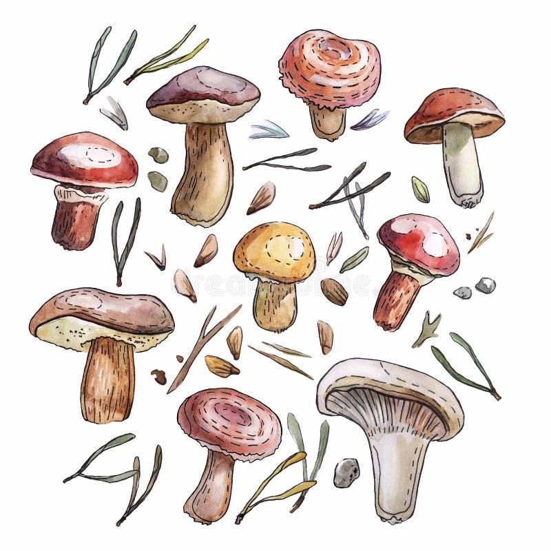 Vattenfärgchampinjonuppsättning, naturalistisk illustration stock illustrationer