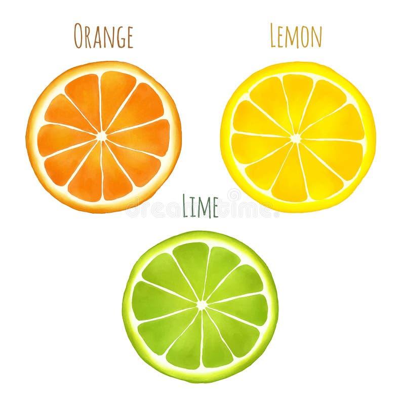 VattenfärgCitruis frukter stock illustrationer