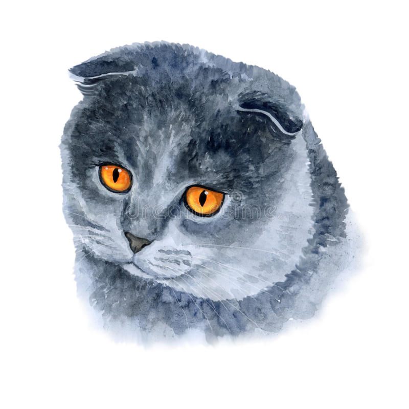 Vattenfärgcloseupstående av den gulliga katten för skotskt veck på vit bakgrund Hand dragit hem husdjur tree för illustration för royaltyfri illustrationer
