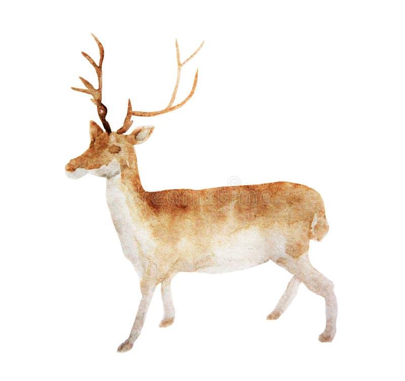 Vattenfärgen behandla som ett barn hjortar handen målade Fawn Illustration som isoleras på vit bakgrund royaltyfri illustrationer