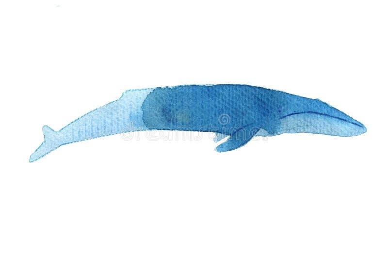 Vattenfärgen skissar av blått val white för bakgrundsfingeravtryckillustration Realistiska proportioner vektor illustrationer