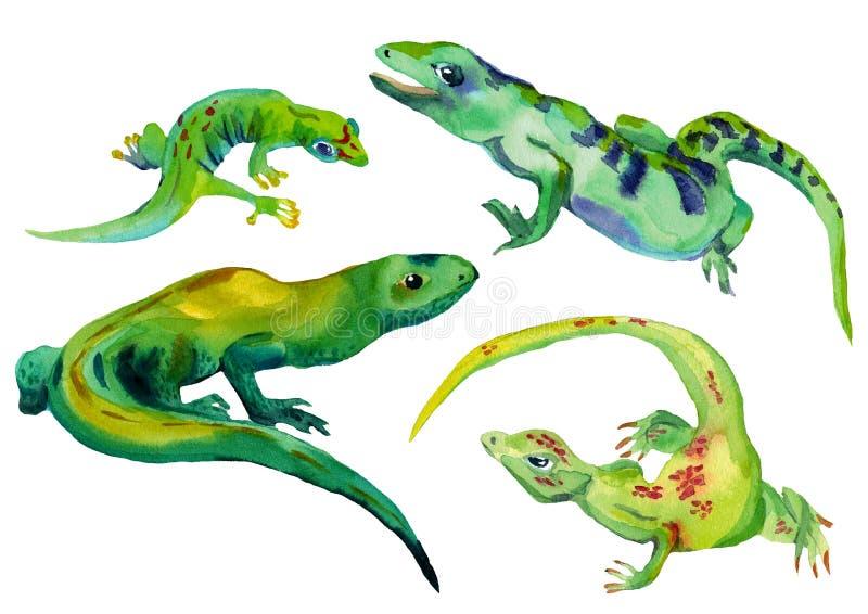 Vattenfärgen ställde in av isolerad grön färg för tropiska ödlor vektor illustrationer
