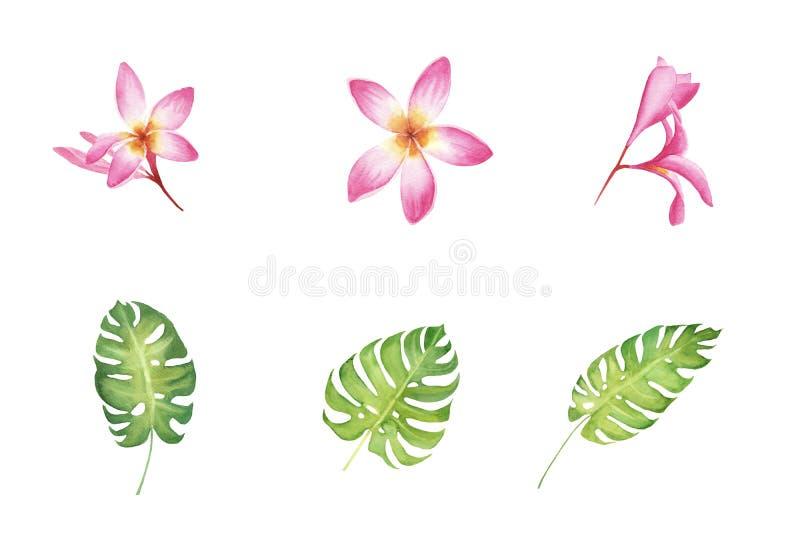 Vattenfärgen ställde in av tropiska hibiskusblommor och monsterasidor som isolerades på vit bakgrund royaltyfri illustrationer