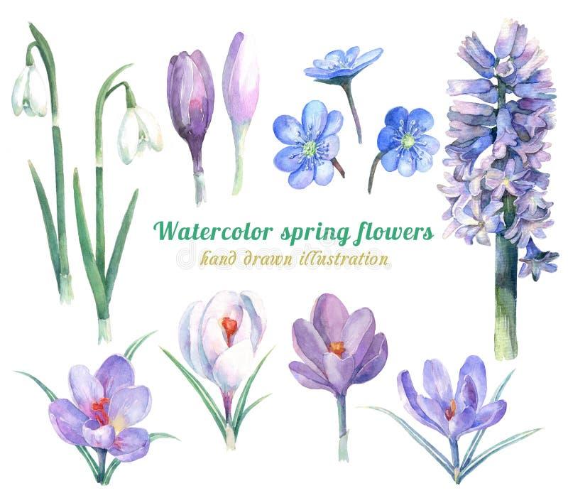 Vattenfärgen ställde in av vårblommor - hyacint, krokusar, snödroppar och liverleaf royaltyfria bilder