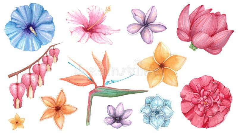 Vattenfärgen ställde in med exotiska blommor royaltyfri illustrationer