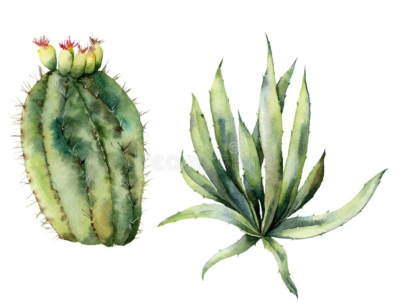 Vattenfärgen ställde in med mexikanska kakturs Handen målade den blom- samlingen med ökenkaktuns, agava Botanisk illustration royaltyfri illustrationer